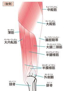腸脛靭帯の構造