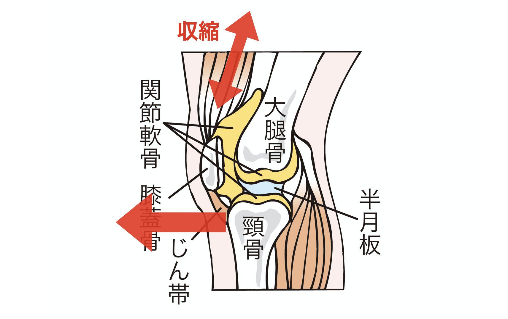 前十字靭帯リハビリ