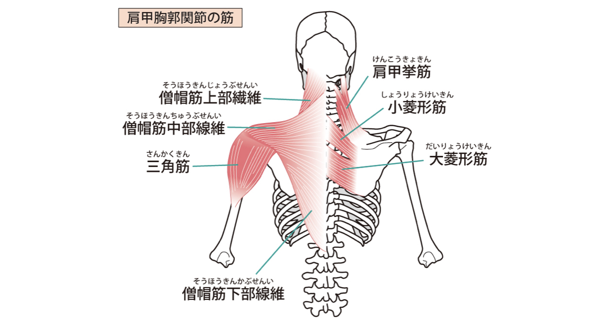 ショルダーパッキング筋肉